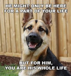 German Shepherd: A companion for life http://german-shepherd-obedience-training.com/6-reasons-to-get-a-german-shepherd/