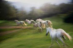 herd by Milan Malovrh on 500px