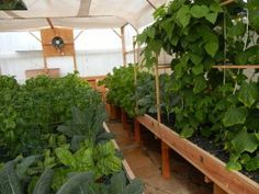 What you can & can't grow with an aquaponics system very important info!!!! Clean food Chemtrails organic