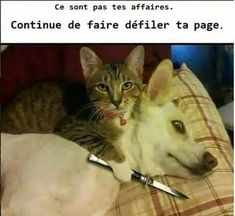 Check out these funny videos of funny cats. This compilation of funny cat videos also has funny cat fails and some funny cat vines. Try not to laugh. Funny Animal Pictures, Dog Pictures, Funny Images, Funny Animals, Cute Animals, Funniest Animals, Adorable Pictures, Animal Fun, Animals Dog