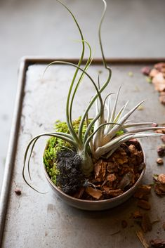 """5 Inspiring (& Easy!) DIY Indoor Gardens    #refinery29  http://www.refinery29.com/urban-gardening#slide24  Air Plants   So, air plants are kinda the """"new black"""" in the foliage world. Why? They don't require soil like their leafy cousins. All you need to do is make sure you place 'em in bright, filtered light — something we can all do, unless you live in a garden apartment."""