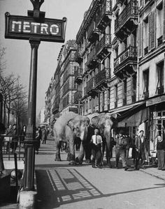 """Circus elephants on the sidewalk in Paris"" photo by American photographer YALE JOEL Paris 3, Old Paris, I Love Paris, Vintage Paris, Paris France, Paris Pictures, Vintage Pictures, Old Pictures, Old Photos"
