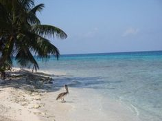 Belize | Laughing Bird Caye National Park - Placencia - Reviews of Laughing ...