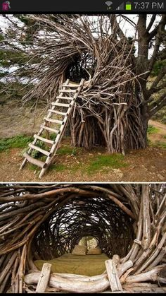 Sexy adult tree house!!!!