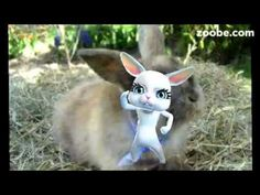 Zoobe - Ich will einen Kaninchenmann.. bin einsam .;-) Liebe, Love, Anim...