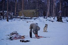 Even reindeer herders skinning a reindeer, Verkhoyansk mountains, Yakutia, Siberia, Russia | par Alex_Saurel