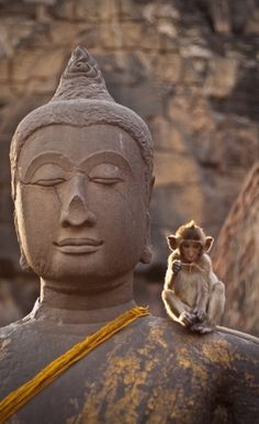Sometimes when I meditate, it's hard to ignore that little monkey on my shoulder…