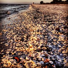 Miles and miles of shells!