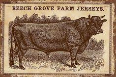 Cows Jerseys 2