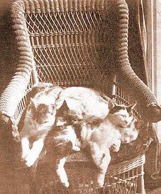 Mark Twain's cats fast asleep