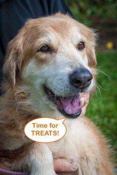 Special Needs! Vision & Hearing impaired! Esther 656 is a super sweet 12yr. old senior who arrived at Golden Retriever Rescue of Southwest Florida, Naples,FL. with severe demodex & heartworm positive. A lot of TLC, good vet care & a prescription diet & she looks & feels like a whole new dog ready to live out her senior years with a loving family.