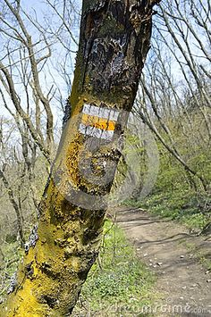 Yellow Hiking Trail Sign on a tree