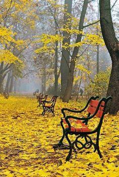 Outono em Poland bela incrível! A terra ri nas flores. Natureza não se apressa, contudo tudo é realizada