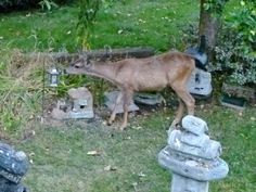 The deer seemed quite curious about the feeders and the lights.