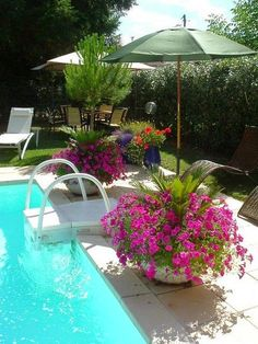Pool landscaping great idea to put umbrellas in pots | Dreaming Gardens