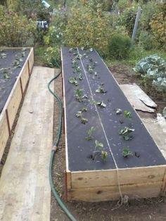Как построить универсальные теплые грядки | Все про помидоры (томаты) - видео, фото, отзовы