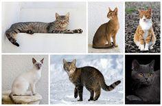 """""""O Grito do Bicho"""": Dia dos gatos foi no dia 08 de agosto e conheça Al..."""