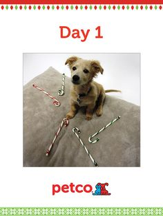 Here is today's 12 Days of Pinterest featured image (12/3/2012). Pin this Rawhide Candy Cane image to one of your boards for a chance to win a 500 dollar Petco shopping spree, plus 500 dollar Petco Gift Card for a Petco Foundation Shelter/Rescue of your choice. Winner will be announced tomorrow (12/4/2012) between 12 pm and 5 pm Pacific time.