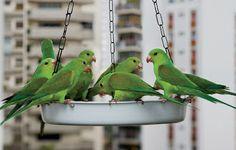EQUILÍBRIO: Tornei-me vizinho dos pássaros, Henry David Thorre...