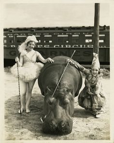Vintage circus with performers and hippo.  please stop the abuse of circus animals by boycotting current circuses that use animals in their acts