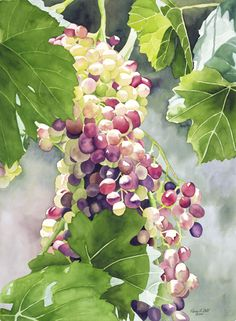"Karen L. Bell Gallery ""Glimmering Grapes"" watercolor painting I can feel the sun's warmth, smell the earth and taste the burst of grape flavor. Watercolor Fruit, Watercolour Painting, Watercolor Flowers, Painting & Drawing, Watercolors, Art Aquarelle, Guache, Fruit Art, Paintings I Love"