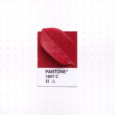 Pantone 1807 color match. The bushes in my backyard are showing a bit of fall colors.