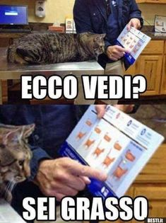 Funny Test, Funny Jokes, Hilarious, Funny Kids, Funny Cute, Funny Images, Funny Photos, Funny Supernatural Memes, Italian Memes