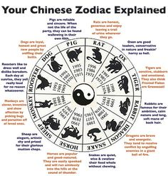 Chinese Zodiac - funny version