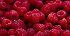 Growing Berries: How to Plant a Berry Patch (Strawberries, Blueberries, etc. Chocolate And Raspberry Tart, Raspberry Ice Cream, Red Chocolate, Raspberry Sauce, Natural Protein Powder, All Berries, Organic Maple Syrup, Single Serve Desserts, Raspberry Ketones