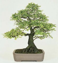 Bonsai. Not sure I would be able to keep it alive, but I think they are sooo beautiful.