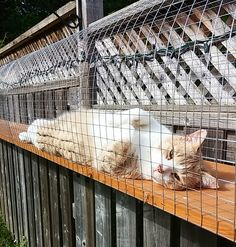 Another awesome outdoor cat enclosure :http://www.cuckoo4design.com/2015/06/another-awesome-outdoor-cat-enclosure.html