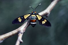 Rainforest Insect Rainforest Insects, Rainforest Action Network, Rainforest Project, Rainforests, Costa Rica, Tropical, Projects, Animals, Log Projects