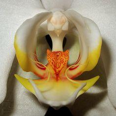 #Orchids