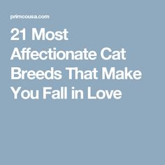 21 Most Affectionate Cat Breeds That Make You Fall in Love