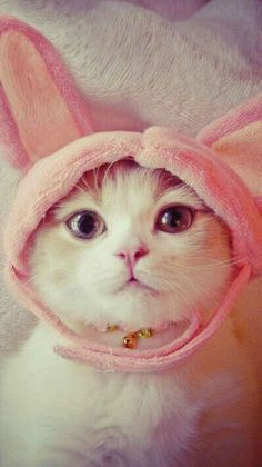 Cute cat and playful cat Kittens Cutest, Cats And Kittens, Animals And Pets, Cute Animals, Easter Cats, Happy Easter, Easter Bunny, Cute Cat Wallpaper, Matou