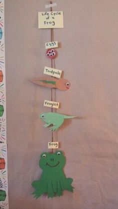 Life cycle This shows the life cycle of a frog. Before doing this you can read a book about the life cycle of a frog, the preschoolers can max up each image with the word. Then they can put the life cycle in order. Kindergarten Science, Science Classroom, Teaching Science, Science For Kids, Science Activities, Science Projects, Sequencing Activities, Food Chain Activities, Frog Theme