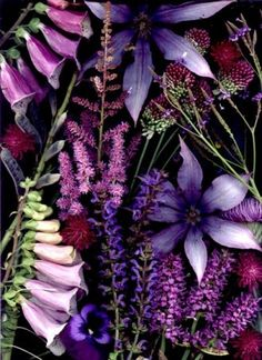 lovely assortment of purple flowers - foxglove, clematis, pansy, liatris.... :)