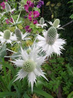 Tvorba eshopu – vytvorte si vlastný eshop s BiznisWebom Plants, Plant, Planets