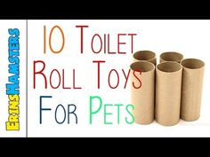 10 Toilet Roll Toys For Small Pets - YouTube