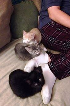 Foster kittens Coral, Nemo and Crush getting in some snuggle time! #rescuecat #adoptdontshop #kitten #kittenish