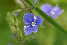 Dag 4: Blauw   #synchroonkijken Plants, Plant, Planets
