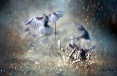 dancing in the rain by yasemin kahram