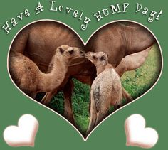 Happy Hump Day Camel Clip Art | hump Images and Graphics