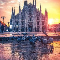 #Milano ❤ #photography #sunset #italy #pigeons #@ enk #travel #piazzaduomo #milan #followback #outdoors #FF #L4L #amazing