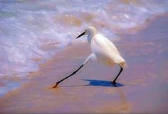 Why do birds have long legs? To test the water silly.