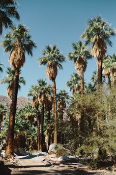 Indian Canyon - Palm Springs I great place to go hiking. Only 15 minutes from Terra Cotta Inn nude sunbathing resort and spa