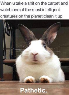 Bunny version Animal Memes, Hare, Funny Memes, Rabbit, Bunny, Rabbits, Funny, Bunny Rabbit, Bunnies
