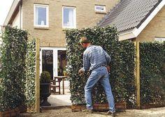 pflegeleichte, moderne Sichtschutz-Kombination aus immergrüner Hecke und Zaun, architektonische Linienführung, undurchdringlich, Sicherheit, Blatttextur