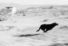 Coyote Atelier photography inspiration: John Divola.