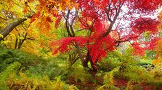 The ultimate Autumn walk